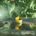 ウトナイ湖サンクチュアリ ブログ