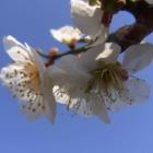 『やっと暖かい春が』の画像