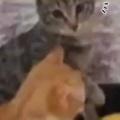 2匹のネコが並んでいた。手前の猫を撫でてみる。私の恋人に何するのぉ! → 猫はこうなる…