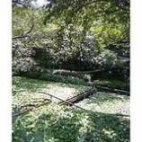 『わさび畑』の画像