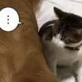 ネコの隣で2匹の犬が寝ていた。どーしようかなぁ… → ちょっと考えて猫はこうした…