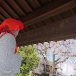 『金仙寺のさくら』の画像