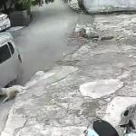 【動画】中国、犬泥棒のプロの犯行の瞬間!車で現れ一瞬で犬を釣って連れ去っていく!
