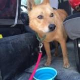 『命を繋ぐ:災害救助犬と戦地英雄犬』の画像