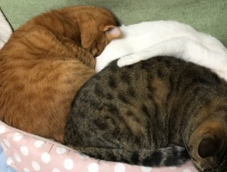 めり込み三色猫団子 20191120