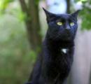 ネズミ急増中のシカゴに救世主が!!   派遣された野良猫「ニャー」