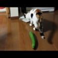 彡(^)(^)「ご飯用意したで」猫「どうも」スリスリ