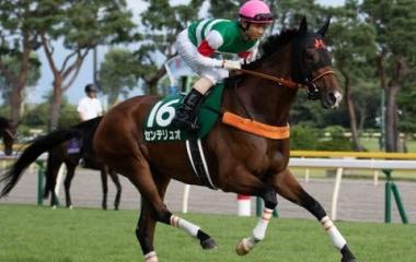 『マーメイドステークス2020 【有力馬分析】〜波乱のハンデ牝馬限定戦を制するのは〜』の画像