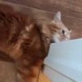 ネコが足元で遊んでいたので「スマホ」で撮ってみた。こっちに気づいた → こうなる…