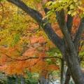 秋のデジカメ講座