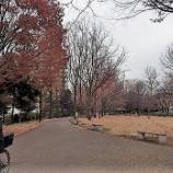 『12月の東大和南公園』の画像