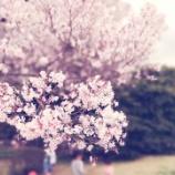 『皇居「東御苑」お花見ツアー』の画像