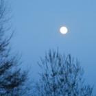 『月夜に帰ってきた』の画像