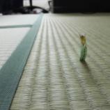 『浪速区桜川にあります某会社の社長室(休憩室)の畳の表替え〜!!』の画像