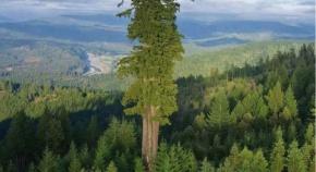 世界最大の木がヤバすぎるwww