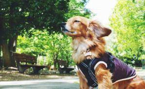 犬にとっては重要な「嗅ぐ」という行為