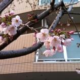 『戸田市でサクラ咲く!』の画像
