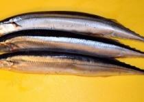 【朗報】サンマ、大豊漁