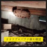 『オオスズメバチ駆除案件 vol.2』の画像