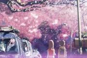 【画像有】桜はなぜ1週間しか仕事をしないのか…福岡で開花