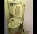 階上の住民が猫砂をトイレに流した結果 衝撃の動画を投稿