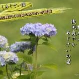 『みちのくあじさい園』の画像