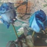 『幸せを呼ぶ青い薔薇』の画像