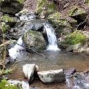 渓流沿いの林道からヤマメ&イワナを撮る🐟📷