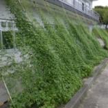 『続・緑のカーテン(8/11)』の画像