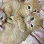 猫の里親に応募した結果wwwwwwww