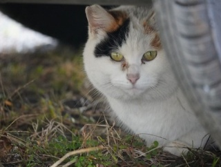 道端で出会った猫撮った(※画像あり)