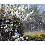 『我が手塩にかけた庭からの風景』の画像