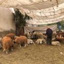 モロッコのイード【イスラムの犠牲祭】