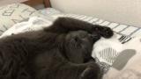 【朗報】ウチのネッコ、爆睡www(※画像あり)