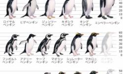 ペンギンって色々種類がいるけど、どれが好き?