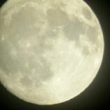 『お月見にはお団子を🌕🍡😋』の画像
