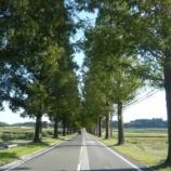 『いつか行きたい日本の名所 マキノ高原 メタセコイア並木』の画像