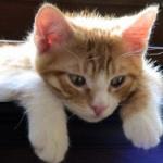 引っ越しするときにネコってどうしてる?