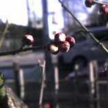 『梅は咲いたか桜はまだか!』の画像
