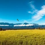 『標高1000mの田んぼ』の画像