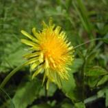 『山で見つけた草花』の画像