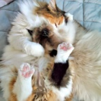 みちこま!〜猫と人の日常〜