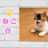 『【保護猫紹介】にかちゃん♀ 遊ぶのが大好きな女の子♪』の画像