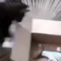 ネコは盗みにきたのかな? 箱の中に1匹の魚がいた。もらうにゃ! → 猫はこうした…