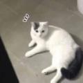 ネコが床でくつろいでいた。その様子をちょっと覗いてみる。にゃんだ?なんか用か? → 気づいた猫はこんな感じ…