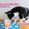 うまんまクッキング☆バターサンドを作っちゃお!