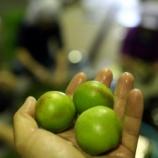 『やっとこさ手に入れた無農薬栽培の青梅で梅酢を仕込みました』の画像