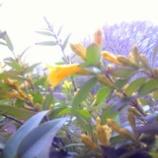 『ジャスミンの季節』の画像