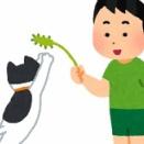 【動画】ドバイの猫じゃらしのスケールが違いすぎるwww「面白い!」「致命傷を負いそう」