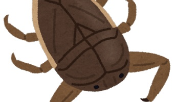 【虫注意】タガメとかいう見た目の割にえげつない食べ方する田んぼ最強生物wwwwwwwwwwww